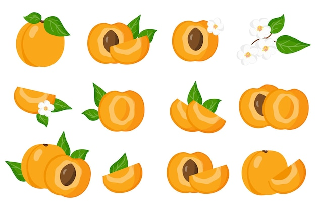 Set of illustrations with apricot exotic fruits, flowers and leaves isolated on a white background.