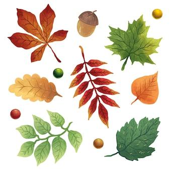 A set of illustrations with autumn leaves, acorn, oak leaf, maple, linden, elm, chestnut, walnut and berries