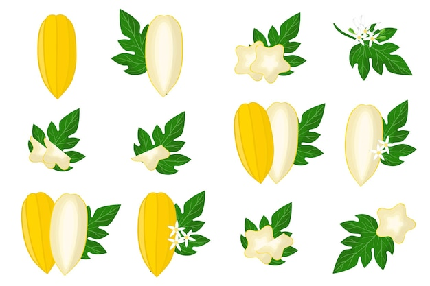 Set of illustrations with babaco exotic fruits, flowers and leaves isolated on a white background.
