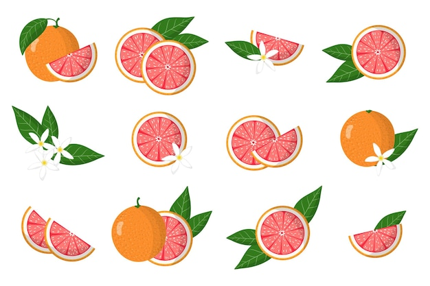 Set of illustrations with grapefruit exotic citrus fruits, flowers and leaves isolated on a white background.