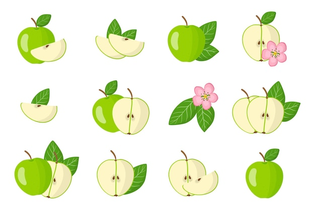 Set of illustrations with green apple exotic fruits, flowers and leaves isolated on a white background.