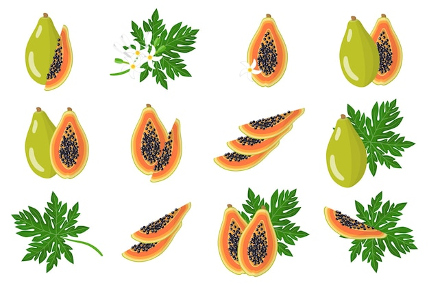 Set of illustrations with papaya exotic fruits, flowers and leaves isolated