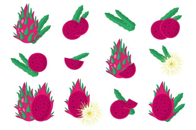 Set of illustrations with sweet red pitaya exotic fruits, flowers and leaves isolated on a white background.