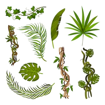 Set of images of different leaves and stems.