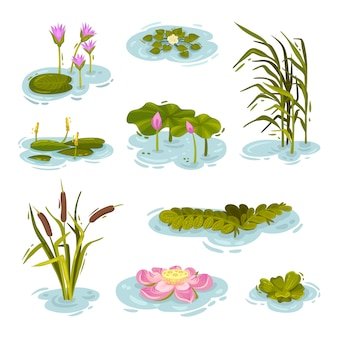 Set of images of plants on the water.  illustration on white background.