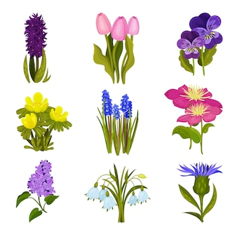Set of images of spring flowers