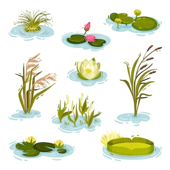 Set of images of water lily, reed, reed on water.  illustration on white background.