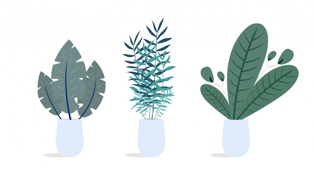 Set of indoor plants. illustration