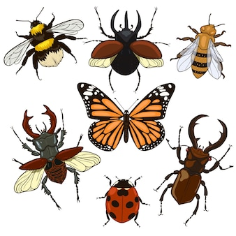 Set of insects isolated on a white background.  graphics.