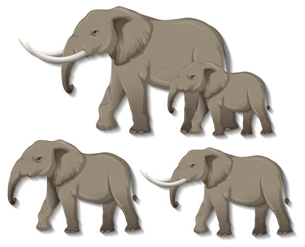 Set of isolated elephants on white background