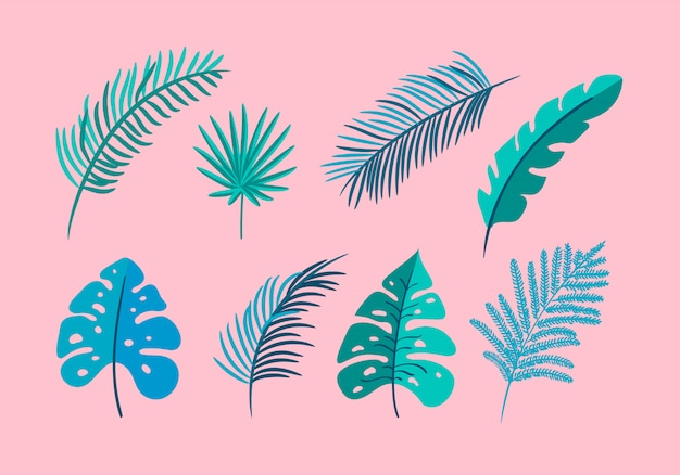 Set of isolated flat leaves palm