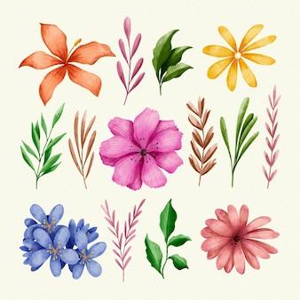 Set di fiori e foglie isolati