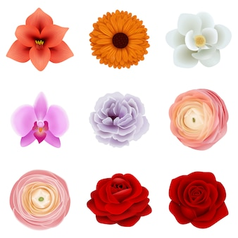 Set of isolated flowers