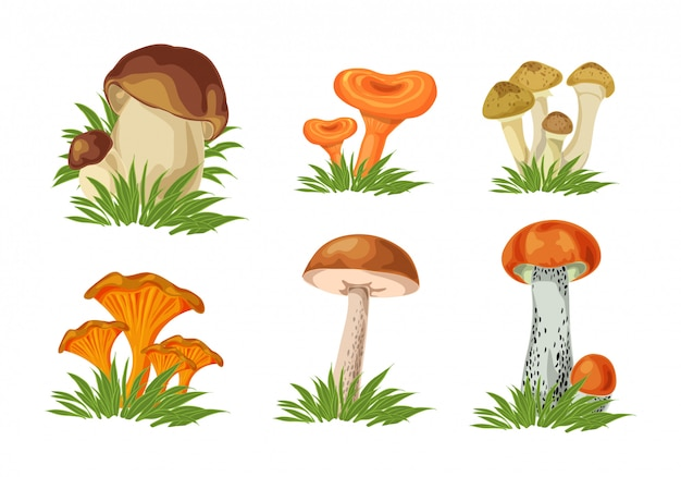 Set of isolated forest mushrooms