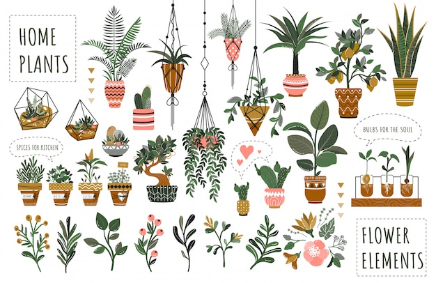 Set of isolated houseplants in flowerpots  illustration