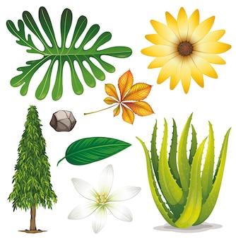 Set di oggetti isolati tema natura