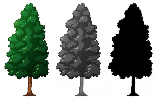 Set of isolated tree