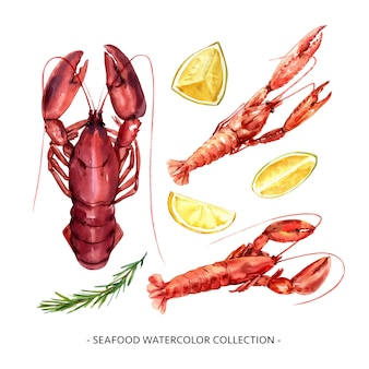 Set of isolated watercolor crayfish, lobster illustration for decorative use.