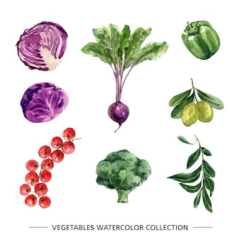 Set of isolated watercolor vegetable