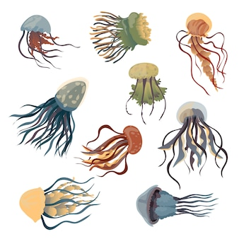 Set of jellyfish of different shapes and colors.