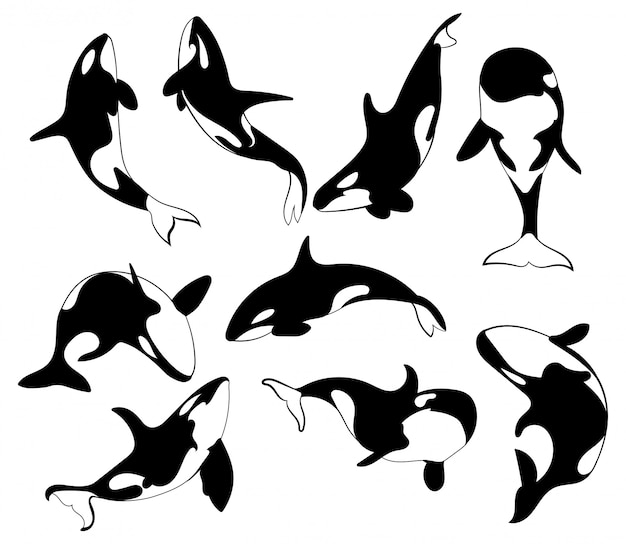 Set of killer whales. collection of stylized orca whale.