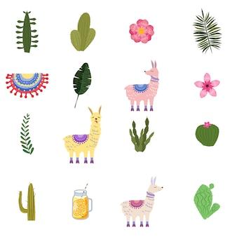 Set lama alpaca cacti drinks and decorative