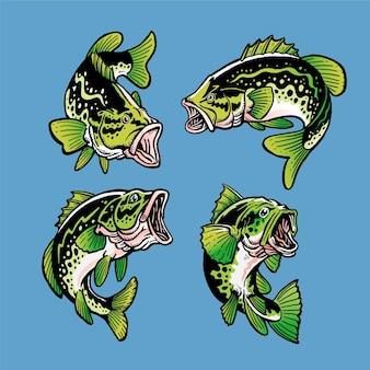 Set of largemouth bass fishes