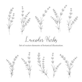 Set of lavender flowers.