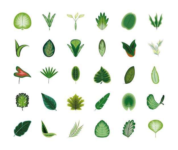 セット葉葉枝葉