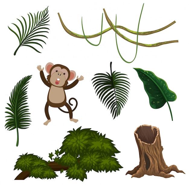 A set of leaf and monkey