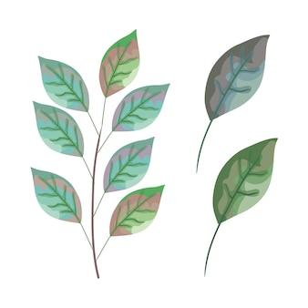Set leafs plant icons
