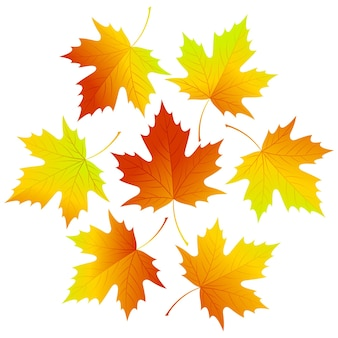 Set of leaves falling