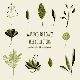 Set di albero di foglie in stile acquerello