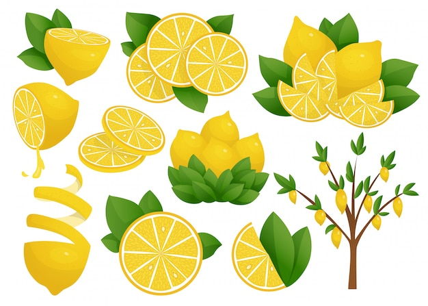 Set of lemon slice. lemon tree. fresh sour lemon.