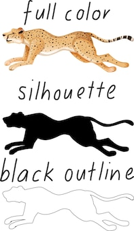 Set of leopard in color, silhouette and black outline on white background