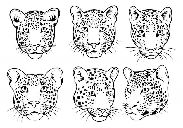 Set of leopards face. collection of portraits of wild animals. vector illustration.