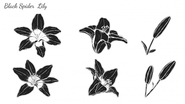 Set of lily