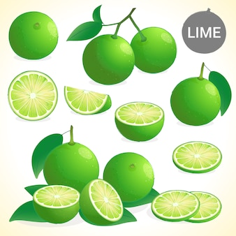 Set of lime in various styles vector format