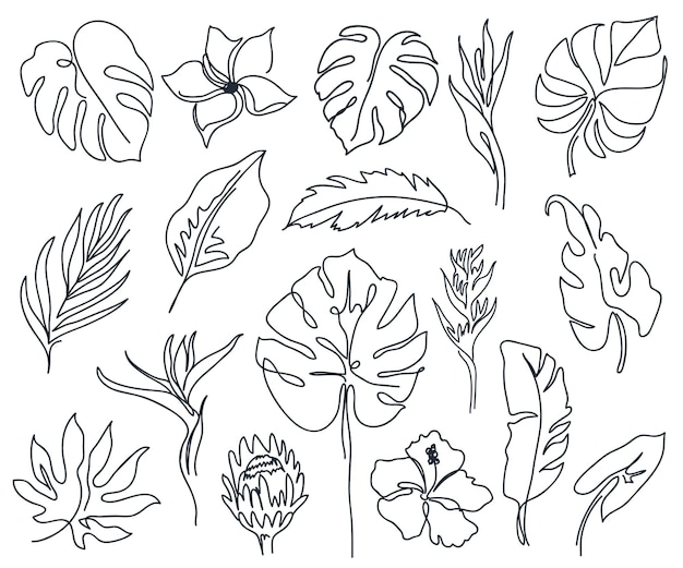 Set of linear various flowers monstera leaves and other leaves black and white art minimal outline silhouette