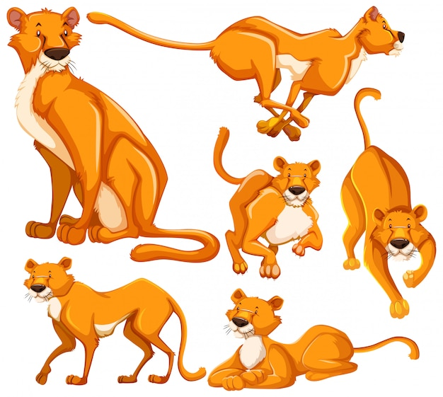 Set of lioness cartoon character