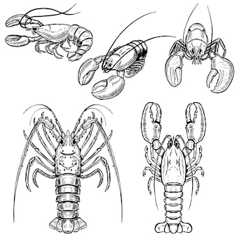Set of lobster illustrations  on white background.  elements for poster, menu.  illustration