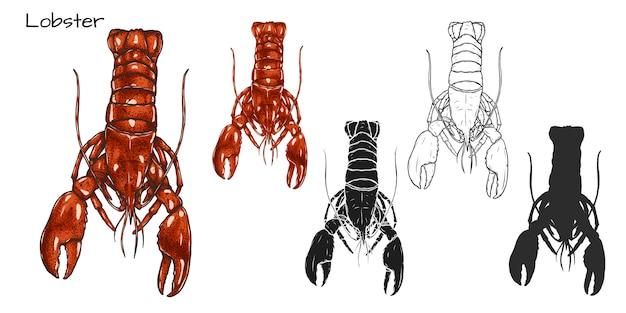 Set of lobster on white