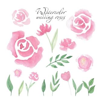 선물 카드, 초대장, 결혼식 메뉴를 위한 느슨한 수채색 장미를 설정합니다.