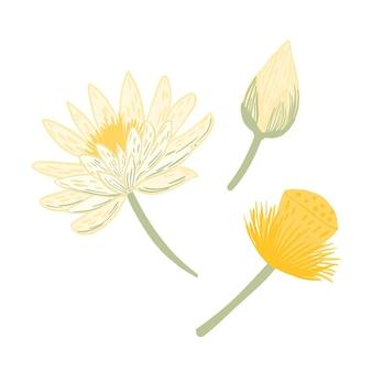 연꽃, 꽃 봉오리 및 씨앗을 설정하십시오.