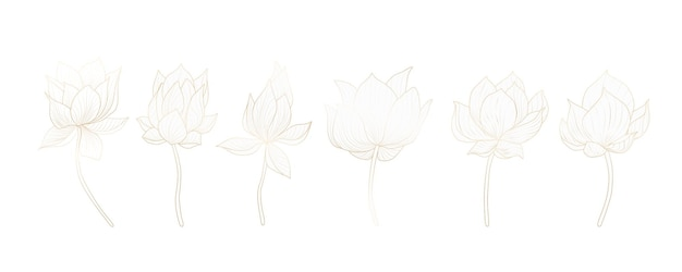 Set of lotus flowers in white for decoration of invitations, web banners, social networks.