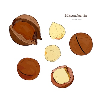 Set of macadamia