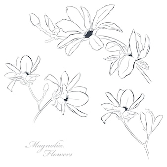 Set of magnolia flowers on white background in line art style