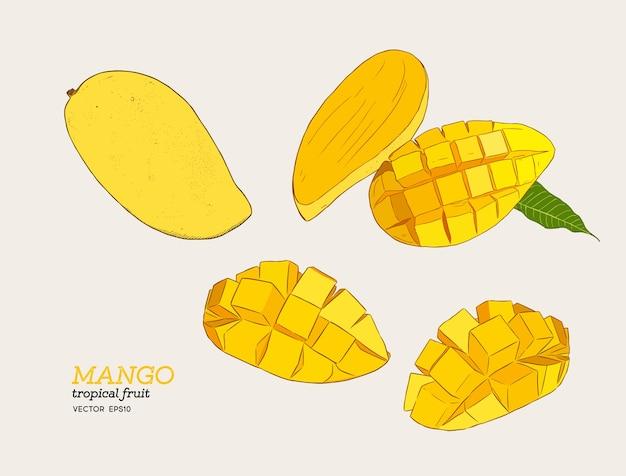 Set of mangoes
