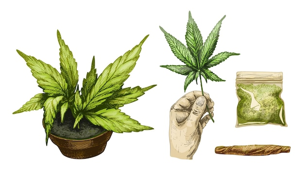 Set marijuana cigarettes hand hold leaf plastic bag plant cannabis in pot vector engraving