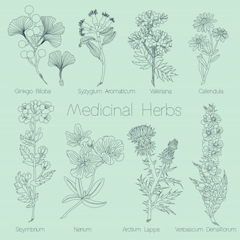 Set of medical herbs